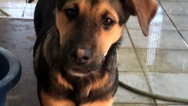 """""""Avevano detto che l'avrebbero adottata, ma non si sono fatti più vivi"""": appello per l'adozione di una cagnolina"""