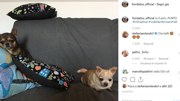fiordaliso cani-2-2