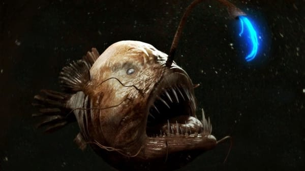 Anglerfish (Immagine tratta da facebook)