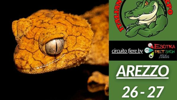 Animali esotici protagonisti ad Arezzo: torna Italian Reptiles Expo
