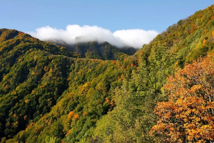Lo spettacolo dell'autunno nel Parco delle Foreste Casentinesi