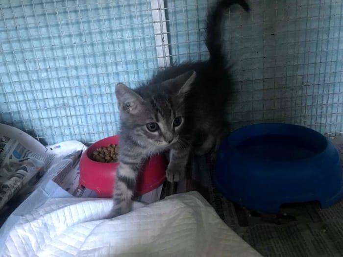 gattini da adottare 4
